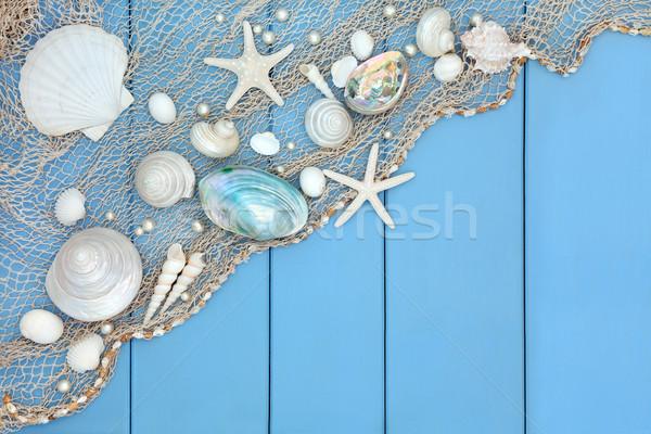 Seashell Collage  Stock photo © marilyna