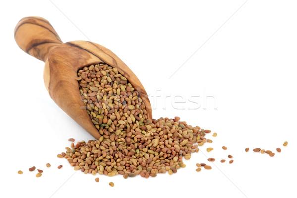 Alfalfa Seed Stock photo © marilyna
