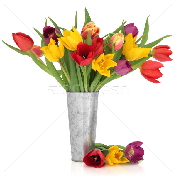 Stock photo: Tulip Flower Beauty