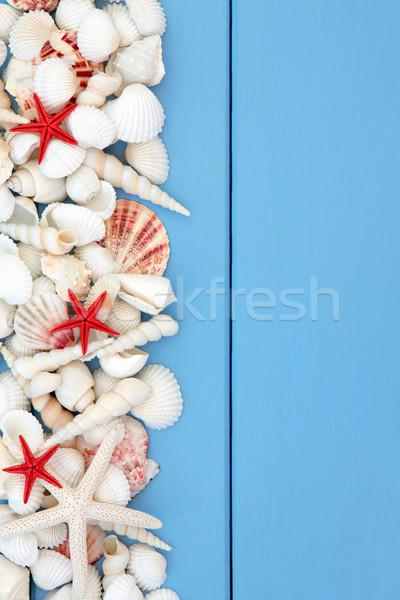 Beach Shell Beauty Stock photo © marilyna