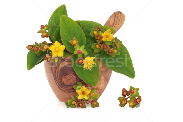 St Johns Wort Herb and Flowers Stock photo © marilyna