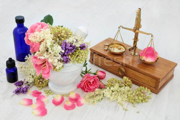 Zdjęcia stock: Kwiaty · zioła · wzrosła · lawendy · herb · nasion