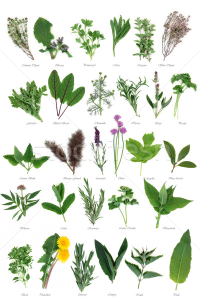 Large Herb Selection Stock photo © marilyna