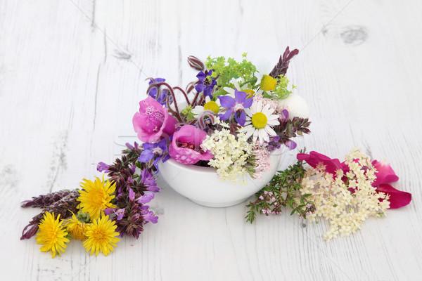 Phytothérapie fleur herbe utilisé naturelles bois Photo stock © marilyna