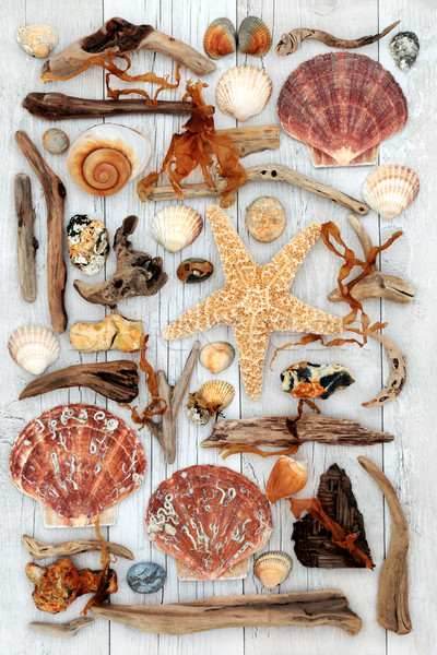 Concha troncos abstrato arte alga rocha Foto stock © marilyna