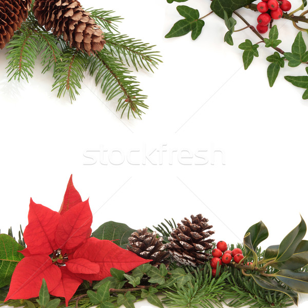 Winter flora fauna grens christmas decoratief Stockfoto © marilyna