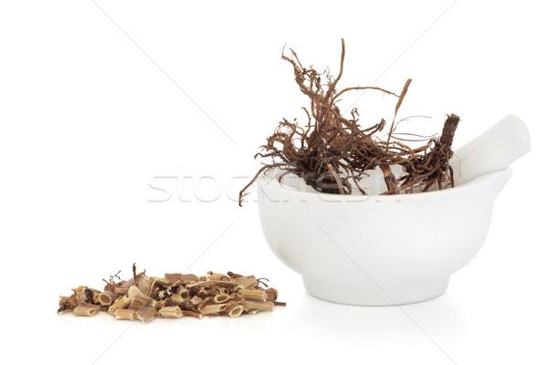 Valerian Herb Root Stock photo © marilyna