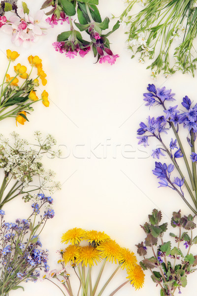 Bahar kır çiçeği sınır soyut krem çiçek Stok fotoğraf © marilyna