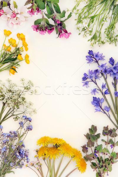 Primavera flor silvestre frontera resumen crema flor Foto stock © marilyna
