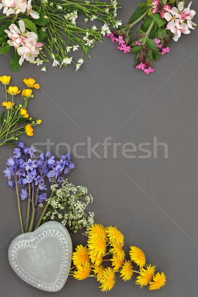 Spring Flower Beauty Stock photo © marilyna