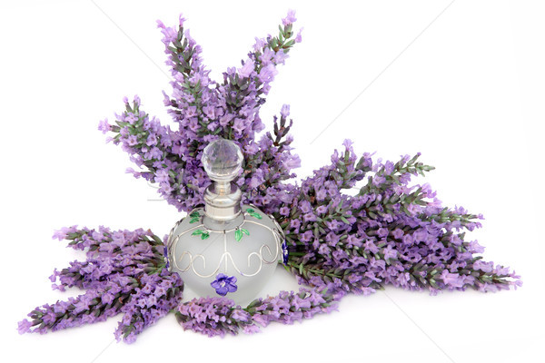 Lavender Flower Scent Stock photo © marilyna