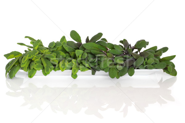 Sage Herb Leaf Seletion Stock photo © marilyna