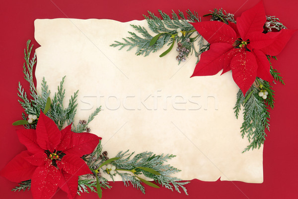 Poinsettia Flower Background Border Stock photo © marilyna