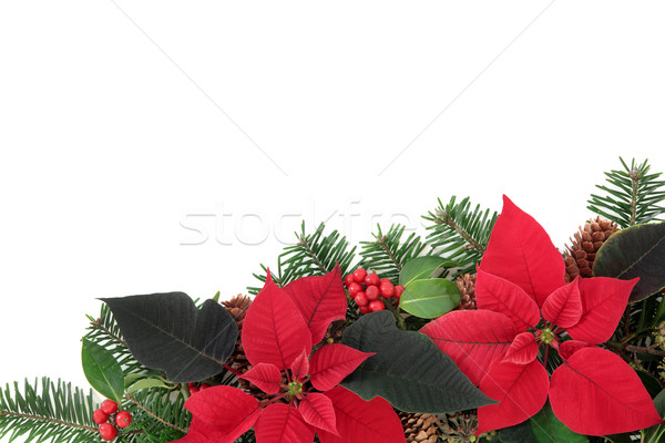 Red Poinsettia Flower Border Stock photo © marilyna