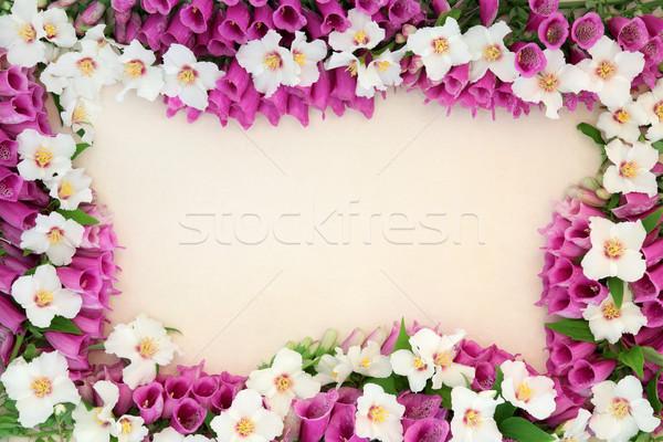 Zomer bloem grens oranje room Stockfoto © marilyna