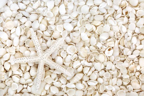 Starfish and Seashell Beauty Stock photo © marilyna