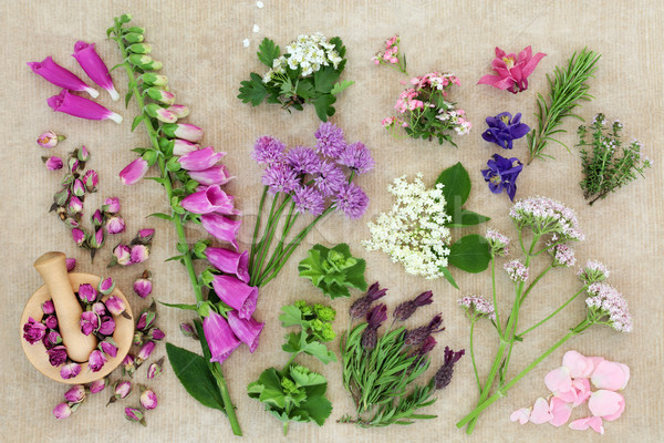 Herbal Medicine with Herbs and Flowers Stock photo © marilyna