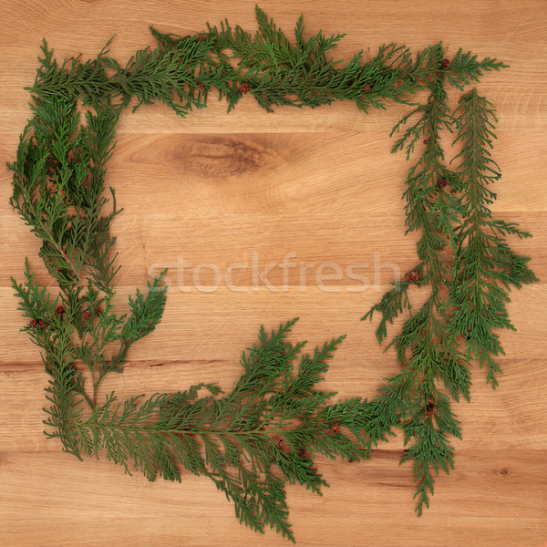 Cedar Cypress Border on Oak Stock photo © marilyna