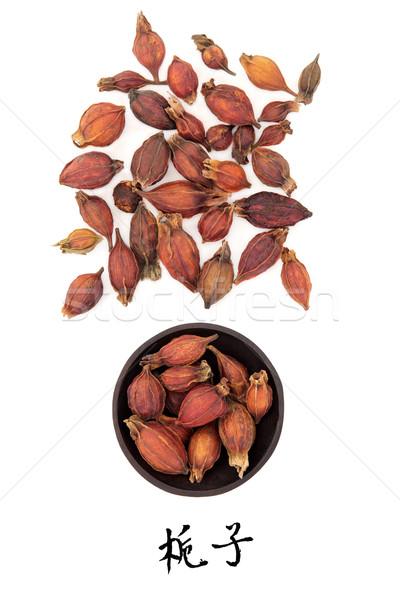 Gardenia Fruit Stock photo © marilyna