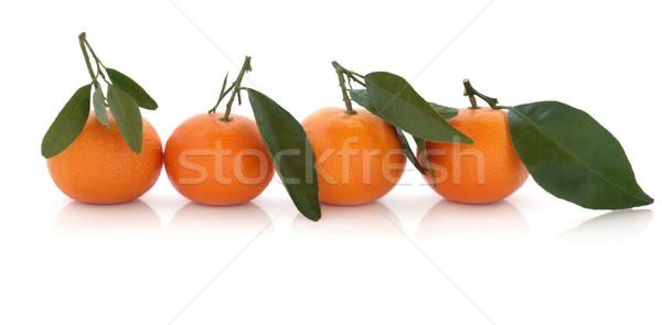 Mandarine orange Früchte line Blatt isoliert weiß Stock foto © marilyna