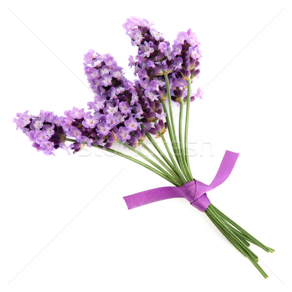 Stock photo: Lavender Herb
