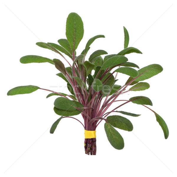 Sage Herb Leaf Posy Stock photo © marilyna