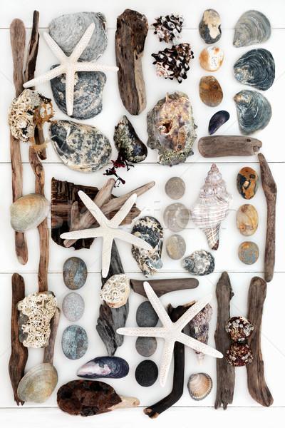Seaside Treasure Collage Stock photo © marilyna
