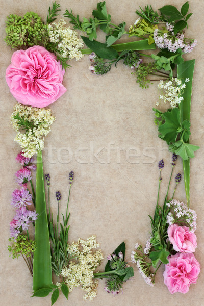 Medicinal Herb and Flower Border Stock photo © marilyna
