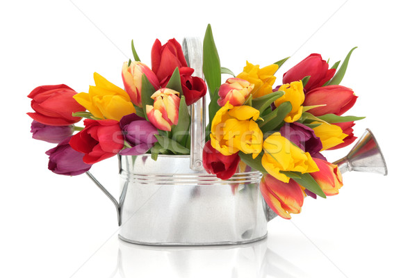 Lâle çiçek güzellik gökkuşağı çiçekler eski Stok fotoğraf © marilyna