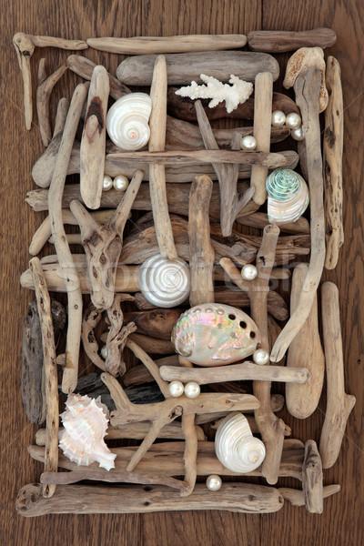 Concha troncos beleza mar concha abstrato Foto stock © marilyna