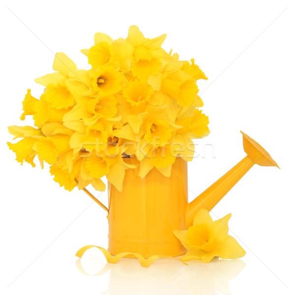 Nergis çiçek güzellik sarı sulama Stok fotoğraf © marilyna