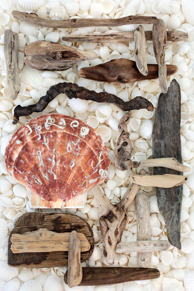 Scallop and Seashell Background  Stock photo © marilyna