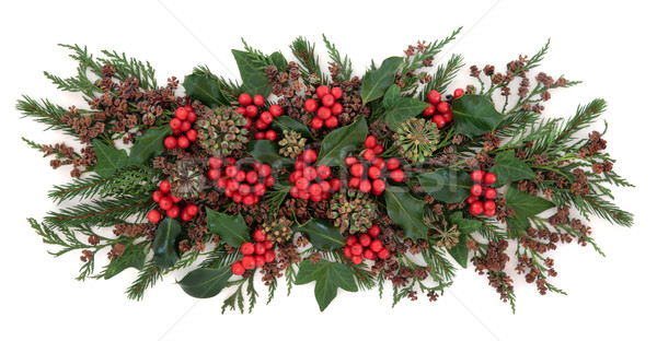 Tradizionale inverno flora Natale ivy Foto d'archivio © marilyna