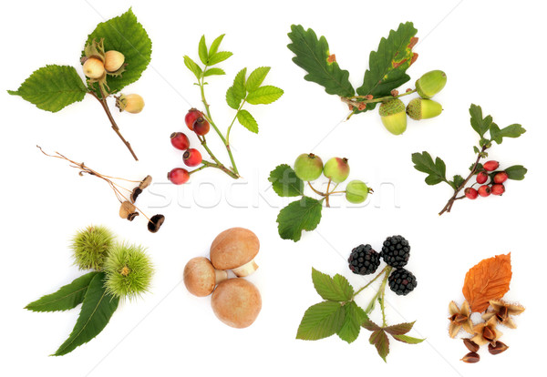 Herbst · natur · studie · obst · nüsse · pilze  stock