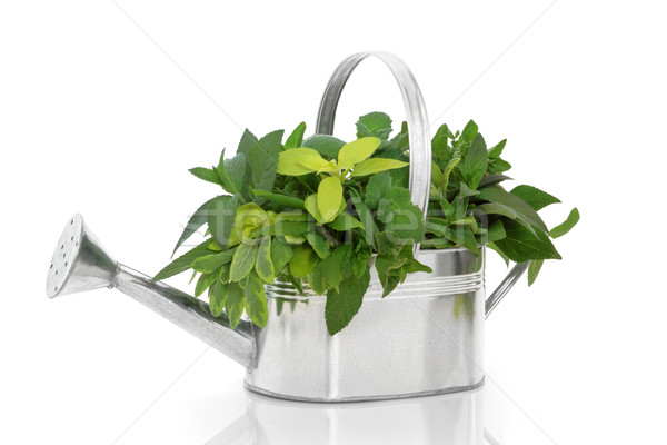 Fresh Herb Selection Stock photo © marilyna