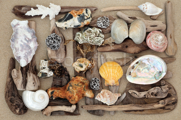 Seashell Driftwood and Rock Abstract Stock photo © marilyna