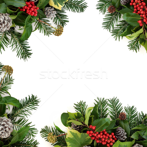 Winter Border with Holly Stock photo © marilyna