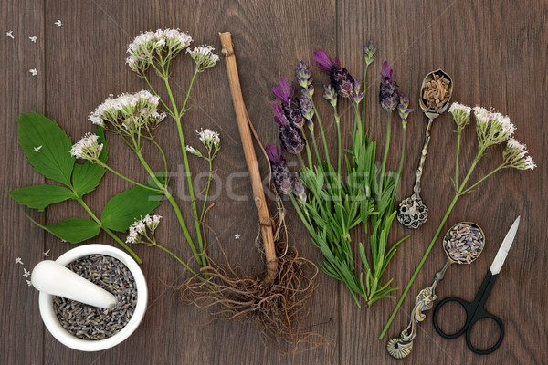 Lavender and Valerian Herb Flowers Stock photo © marilyna