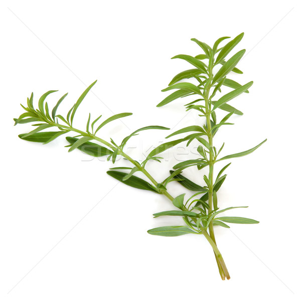 Hyssop Herb Leaves Stock photo © marilyna