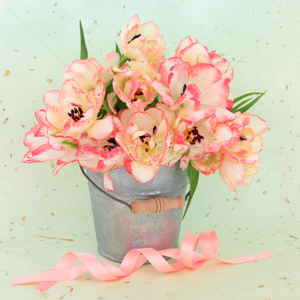 Tulip Flower Beauty Stock photo © marilyna
