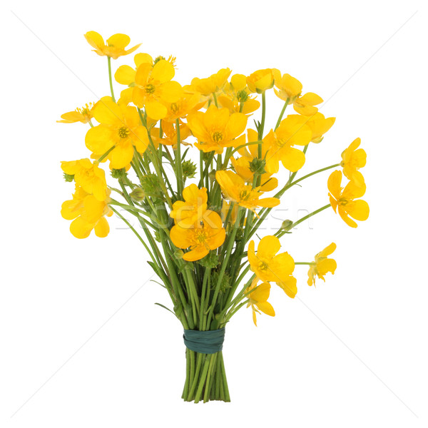 Buttercup Flower Posy Stock photo © marilyna