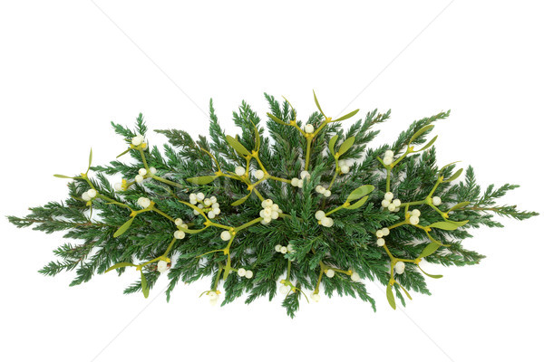Mistletoe and Juniper Fir Decoration Stock photo © marilyna