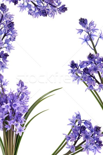 Bluebell Flower Border Stock photo © marilyna