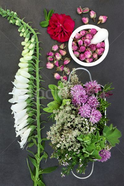 Herbs and Flowers for Herbal Medicine  Stock photo © marilyna