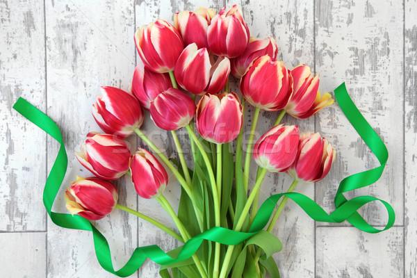 Tulip Beauty Stock photo © marilyna