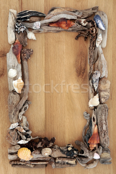 Driftwood rovere confine mare shell abstract Foto d'archivio © marilyna