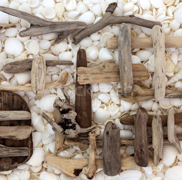 Abstract Driftwood and Seashell Background Stock photo © marilyna