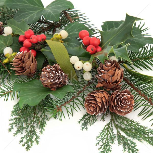 Inverno flora Natale ivy vischio pino Foto d'archivio © marilyna