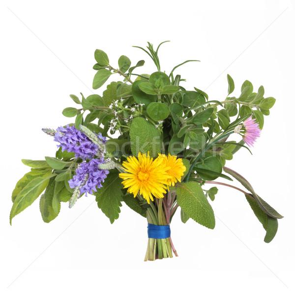 Сток-фото: трава · цветок · лист · изолированный · белый · медицина