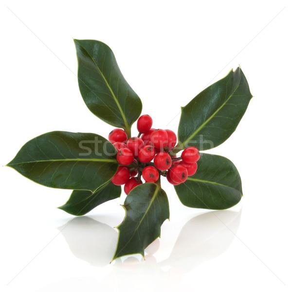 Holly Berry Leaf Sprig Stock photo © marilyna